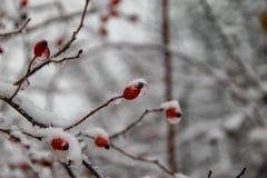 Árvores cobertas com a neve no parque foto de stock royalty free