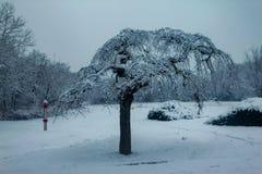 Árvores cobertas com a neve no parque imagem de stock royalty free