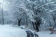 Árvores cobertas com a neve no parque imagem de stock
