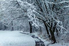 Árvores cobertas com a neve no parque fotos de stock