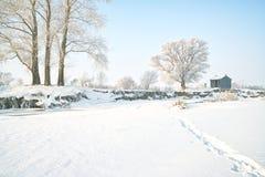 Árvores cobertas com o esmalte Imagens de Stock Royalty Free
