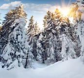 Árvores cobertas com o hoarfrost e a neve fotografia de stock royalty free