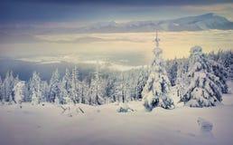 Árvores cobertas com o hoarfrost e a neve nas montanhas Fotografia de Stock