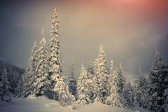 Árvores cobertas com o hoarfrost e a neve nas montanhas Fotos de Stock Royalty Free