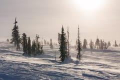 Árvores cobertas com o hoarfrost e a neve nas montanhas Os raios do ` s do sol iluminam as árvores imagens de stock royalty free