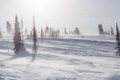 Árvores cobertas com o hoarfrost e a neve nas montanhas Os raios do ` s do sol iluminam as árvores fotos de stock