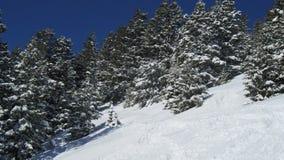Árvores cobertas na neve Fotografia de Stock Royalty Free