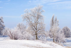 Árvores cobertas pela geada, pelo gelo e pela neve perto do rio de Dnieper foto de stock