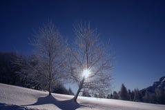 Árvores cobertas pela neve Foto de Stock