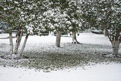 Árvores cobertos de neve imagem de stock royalty free