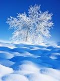 Árvores cobertos de neve foto de stock