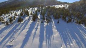 Árvores cobertos de neve aéreas Natureza Forest Travel White Tourism do inverno da paisagem video estoque