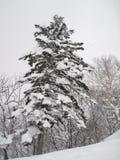 Árvores cobertos de neve belamente pitorescas, queda de neve pesada de seguimento imagens de stock