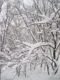 Árvores cobertos de neve belamente pitorescas, queda de neve pesada de seguimento foto de stock royalty free