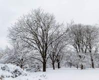 Árvores cobertos de neve contra o céu Fotografia de Stock
