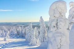 Árvores cobertos de neve em inclinações de montanha em um dia ensolarado brilhante Imagem de Stock