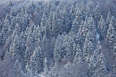 Árvores cobertos de neve nas dolomites italianas Fotografia de Stock Royalty Free