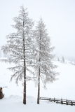 Árvores cobertos de neve no campo Fotos de Stock