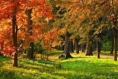 Árvores coloridas imagens de stock royalty free