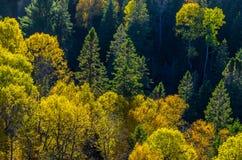 Árvores coloridas Fotos de Stock