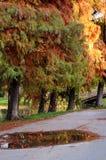 Árvores coloridas fotografia de stock