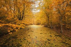 Árvores coloridas bonitas do outono na floresta Fotografia de Stock Royalty Free
