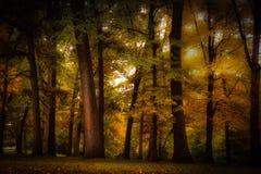 Árvores coloridas do outono imagens de stock