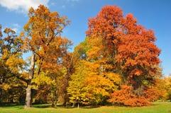 Árvores coloridas do outono Imagem de Stock