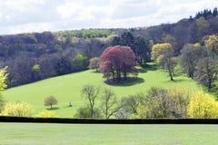 Árvores coloridas do outono no prado montanhoso imagem de stock royalty free