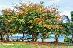 Árvores coloridas em Mana Island, Fiji imagem de stock royalty free