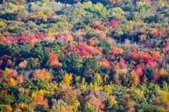 Árvores coloridas em Wisconsin Foto de Stock