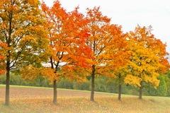 Árvores coloridas no outono Imagem de Stock