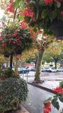 Árvores coloridas no sul de França Foto de Stock