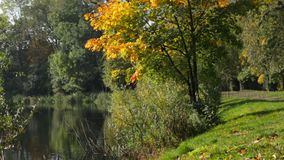 Árvores coloridos do outono vídeos de arquivo