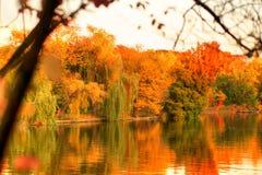 Árvores coloridos do outono que refletem no lago Imagens de Stock