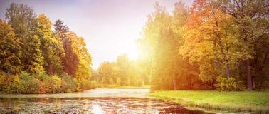 Árvores com amarelo Fotografia de Stock
