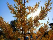 Árvores com as árvores do gelo da luz solar imagem de stock royalty free