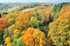 Árvores com as folhas amarelas no outono Imagens de Stock Royalty Free