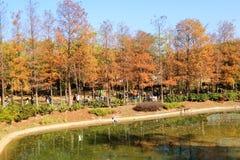 Árvores com as folhas do vermelho e do amarelo em Tsing Yi Park Fotografia de Stock