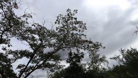 Árvores com as nuvens moventes no fundo filme
