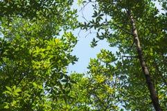 Árvores com céu Imagens de Stock