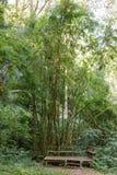 Árvores com cadeira de madeira e área de repouso imagens de stock