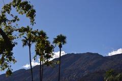 Árvores com cordilheira Foto de Stock Royalty Free