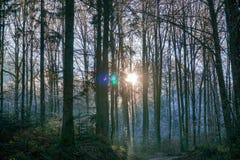 Árvores com fealing azul da cena do inverno da névoa e do sol místico imagem de stock royalty free