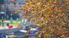 Árvores com folhas amarelas Imagem de Stock Royalty Free