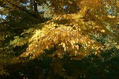 Árvores com folhas de outono imagens de stock royalty free