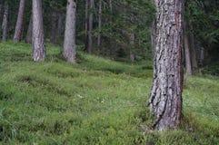Árvores com grama em Forrest místico Imagens de Stock