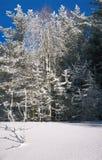 Árvores com hoarfrost Fotos de Stock Royalty Free