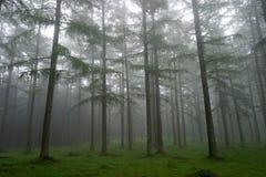 Árvores com névoa da manhã Imagem de Stock