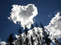 Árvores com a nuvem dada forma coração 2 imagens de stock